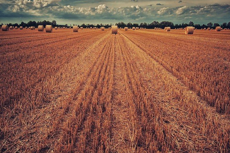 OGM : la Commission européenne ouvre la voie à de nouvelles techniques de sélection végétale